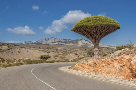 Dragon's Blood Tree at Dixam Plateau
