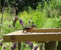 wildlife garden - importance of garden habitats