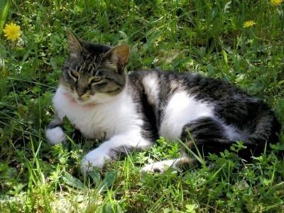 cat in weeds