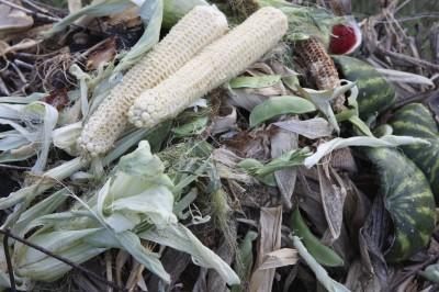 composting corn husks