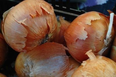 compost-onions