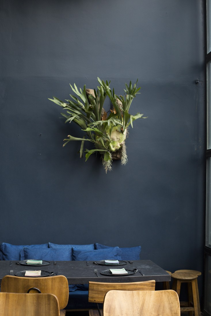 staghorn fern at romita mexico city by mimi giboin for gardenista